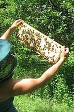 Maine State Beekeepers