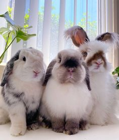 Super Cute Animals, Cute Little Animals, Cute Funny Animals, Cute Dogs, Baby Animals Pictures, Animals And Pets, Bunny Cages, Bunny Rabbits, Cute Baby Bunnies