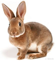 PCRM | PCRM Pushes for Cuts in Animal Testing at Cosmetics Company