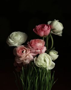 Still Life with  Pink and White Ranunculus Dutch Inspired Still Life Photograph