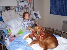 Have you ever brought your dog to visit a family member in the hospital? Therapy animals are helping kids in the hospital recover faster.