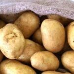 Συνταγή για μπιφτέκια λαχανικών χωρίς λάδι! | ediva.gr Vegetables, Health, Food, Cyprus News, Health Care, Essen, Vegetable Recipes, Meals, Yemek