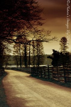 This dreamy photo of country road was take at Mount Vernon located in Alexandria, VA.  The title of this photo is Path To Serenity is From Nature's Images By Design  #natureimagesbydesign  #photography  #nature, $30