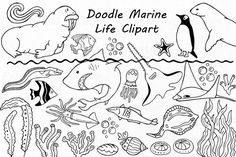 Doodle Marine Life Clipart, Sea Life clip art, Ocean life, PNG, EPS, fish, vector, Under the Sea, For Personal and Commercial use by PassionPNGcreation on Etsy