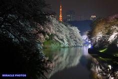 Chidorigafuchi with Tokyo Tower