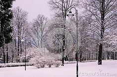 Winter morning in the city park.