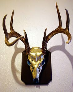 I gilded white deer skull, using turquoise as a base colour. The colours were chosen as representing those of the deserts I was in whilst in the USA