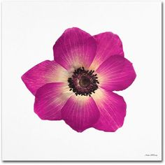 Trademark Fine Art Hot Pink Flower Canvas Art by Kathie McCurdy, Size: 24 x 24, Multicolor