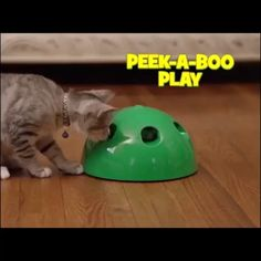 Funny Cat Interactive Toy At Scratching Device For Cat Sharpen Claw Pop Cat Training Toy Pop Cat, Animals And Pets, Cute Animals, Interactive Cat Toys, Gadgets, Cat Treats, Cat Supplies, Guinea Pig Toys, Cat Love