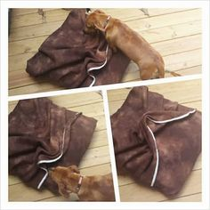 "DIY - Dog ""Envelope"" bed - Or, Dog beds with Blankets Attached"