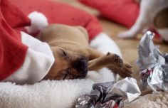 What can you give a pet with nothing this Christmas?