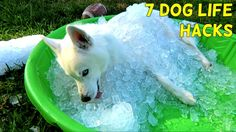 (Video) The Crazy Russian Hacker's 7 Simple Life Hacks for Your Dog! Funny Dogs, Funny Animals, Cute Animals, Pug Puppies, Simple Life Hacks, Diy Stuffed Animals, Beautiful Dogs, Dog Life, Your Dog