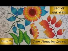 Coloring Tutorial Secret Garden pt. 1 - Flower with Polychromos - YouTube