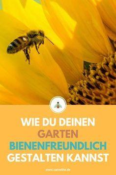 Du möchtest auch gerne die Bienen retten und eine Bienenweide bzw. einen Garten für Bienen anlegen? Hier lernst du, wie du den Bienen mit deinem Garten einen idealen Lebensraum bietest. #bienen #garten #imker #pflanzen #umweltschutz