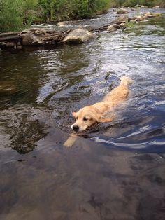 Golden Retriever ~ Classic Look Cute Puppies, Cute Dogs, Dogs And Puppies, Doggies, Golden Dog, Golden Rule, Golden Fish, Mans Best Friend, Dog Life