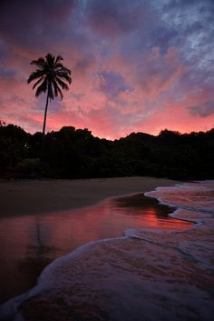 Tropical beach sunset in pink on the sea with palm trees. Click to shop sunset prints by Matthew Williamson.