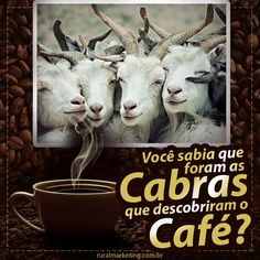 Cabras descobriram o café - Agência de Marketing Rural