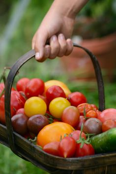 The season now arrived and plenty of fresh fruits and vegetables in the offing.....yum !