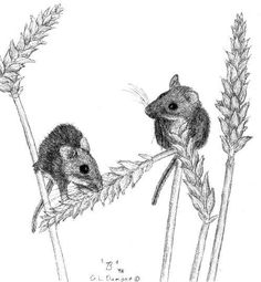 cartoon+images+of+mice | Deer Mice