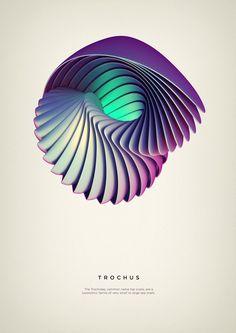 Trochus Art Print