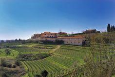 Les vins et vignobles de Slovénie : la maison viticole Movia à Goriška Brda