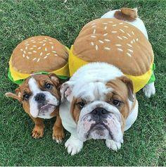 Funny Dogs #BullyDogNation
