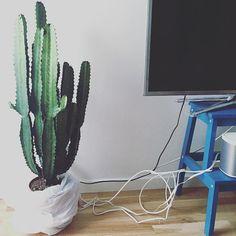 Ny grøn ven der fungere perfekt, som skjuler for grimme stikkontakter  Så mangler jeg bare at få styr på ledningerne  #simplicity #wiremess #kaktus #cowboycactus #interør #interior #interiordetails #homesickblog #detydre #skandinaviskæstetik #skandinaviskehjem #boliginspiration #boligindretning #sonos #myhome