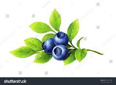 blueberry plant branch
