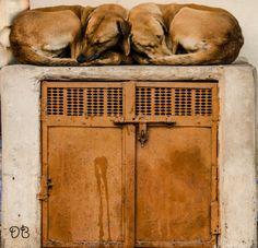 Photo simmetrie canine by daniela boi on 500px