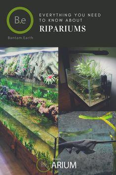 A step-by-step riparium care guide. DIY ripariums for various plants & animals. Diy Aquarium, Nature Aquarium, Planted Aquarium, Aquarium Ideas, Aquarium Landscape, Aquarium Design, Ferns Care, Types Of Ferns, Moss Terrarium