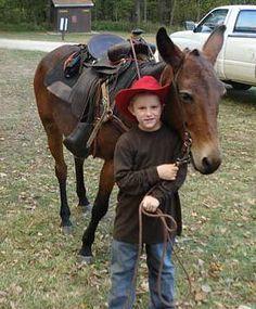 Jones Gentle Saddle Mules