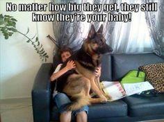 С любимцами собаками везде (35 фото)