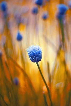 Cornflower #patternpod #beautifulcolor #inspiredbycolor