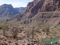 Das Naturwunder – The Grand Canyon in Arizona