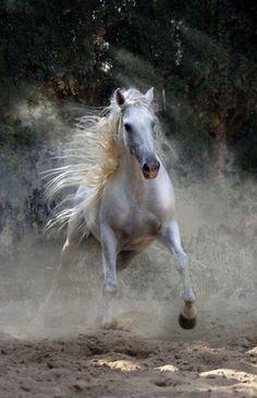 Powerful action shot. #horse http://www.annabelchaffer.com/categories/Equestrian-Gifts/