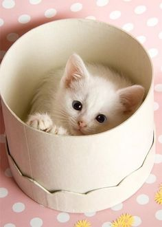Sweet kitten playing peek-a-boo.