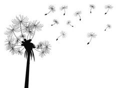 Image Details: Isignstock Contributors Stock photo of isolated dandelion flying seeds from white background. Doodle, 5 Image, Best Stocks, Pattern Art, Art Patterns, Royalty Free Photos, Dandelion, Seeds, Clip Art