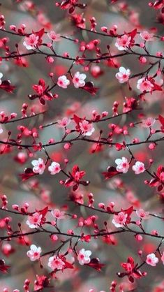 Wall Paper Nature Blumen Ideas For 2019 Tumblr Wallpaper, Floral Wallpaper Iphone, Cute Wallpaper Backgrounds, Aesthetic Iphone Wallpaper, Colorful Wallpaper, Cellphone Wallpaper, Flower Wallpaper, Aesthetic Wallpapers, Cherry Blossom Wallpaper