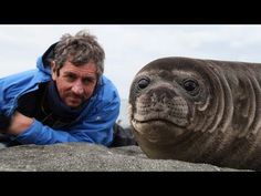 Reporter Charlie Bird was hoping to get some stunning close-up footage of seals on a recent trip to Antarctica... and he got more than he bargained for! Watch as the adorable sea puppy inches closer and closer until the cute baby seal is actually lying on top of him.