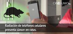 El Programa Nacional de Toxicología (NTP, por sus siglas en inglés) anunció que la radiación de los teléfonos celulares presenta riesgo de cáncer para los seres humanos, basándose en un estudio que demuestra que este tipo de radiación origina cáncer en ratas. El estudio se realizó a base de una muestra de 2,500 ratas expuestasRead More