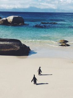 Cape Town South Africa - Surf Collective NYC