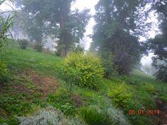 Early morning August fog