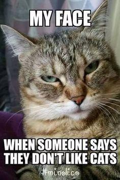 Funny Animal Memes, Funny Animal Videos, Cute Funny Animals, Funny Cute, Cute Cats, Funny Cat Quotes, Cute Cat Memes, I Love Cats, Crazy Cats