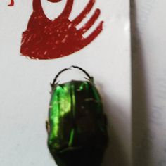 You all know how I love to find symbols in nature. This little guy showed up in our lawn yesterday.  Beetles are old symbols that are found in many cultures around the world.  They represent grounding as they are close to the Earth and also the need to make decisions from a grounded perspective.  The GREEN color of this beetle represents the heart chakra and healing/protection of that area.  Speaking of protection  the hard shell of the beetle serves as its defense.  Do you need to toughen…
