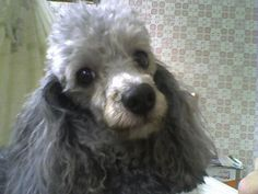 My Lulu