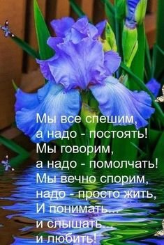 VK is the largest European social network with more than 100 million active users. Light Blue Roses, Laws Of Life, Encouragement, Wisdom, Thoughts, Reading, Words, Quotes, Gifts