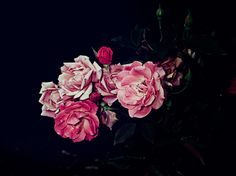 These rose garden prints by photographer, Graham Lott, are gorgeous. I love that when you look a little closer, you'll see the buds aren't exactly alone–they have little bug frien…