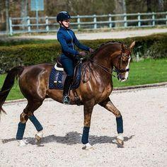 ✨✨✨#equestrian #equestrianstockholm #horse #horses #equestrianperformance #dressageperformance