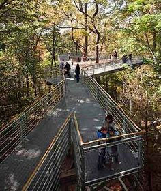Walk Among the Treetops at Philly's Morris Arboretum