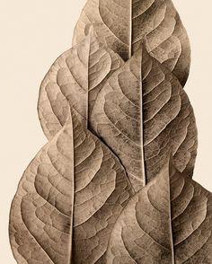 Monument ~ Forest Floor Fine Art Prints